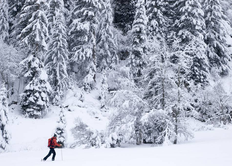 Snowshoeing into the woods from Chalet Edelweiss
